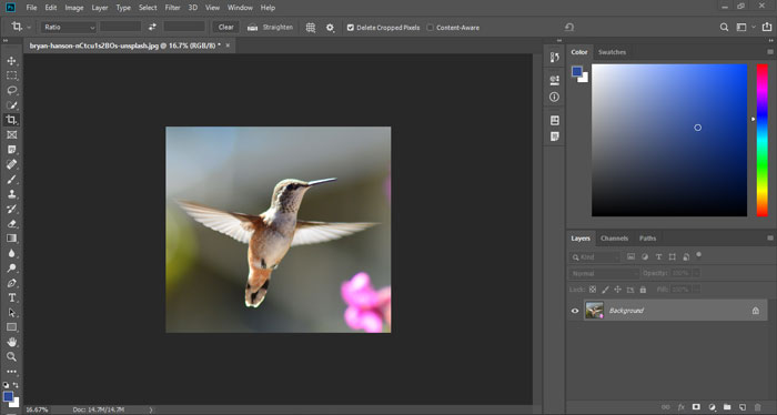 The cropped photo in Photoshop